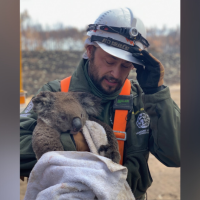 Las Vegas man leads animal search and rescue team in Australia